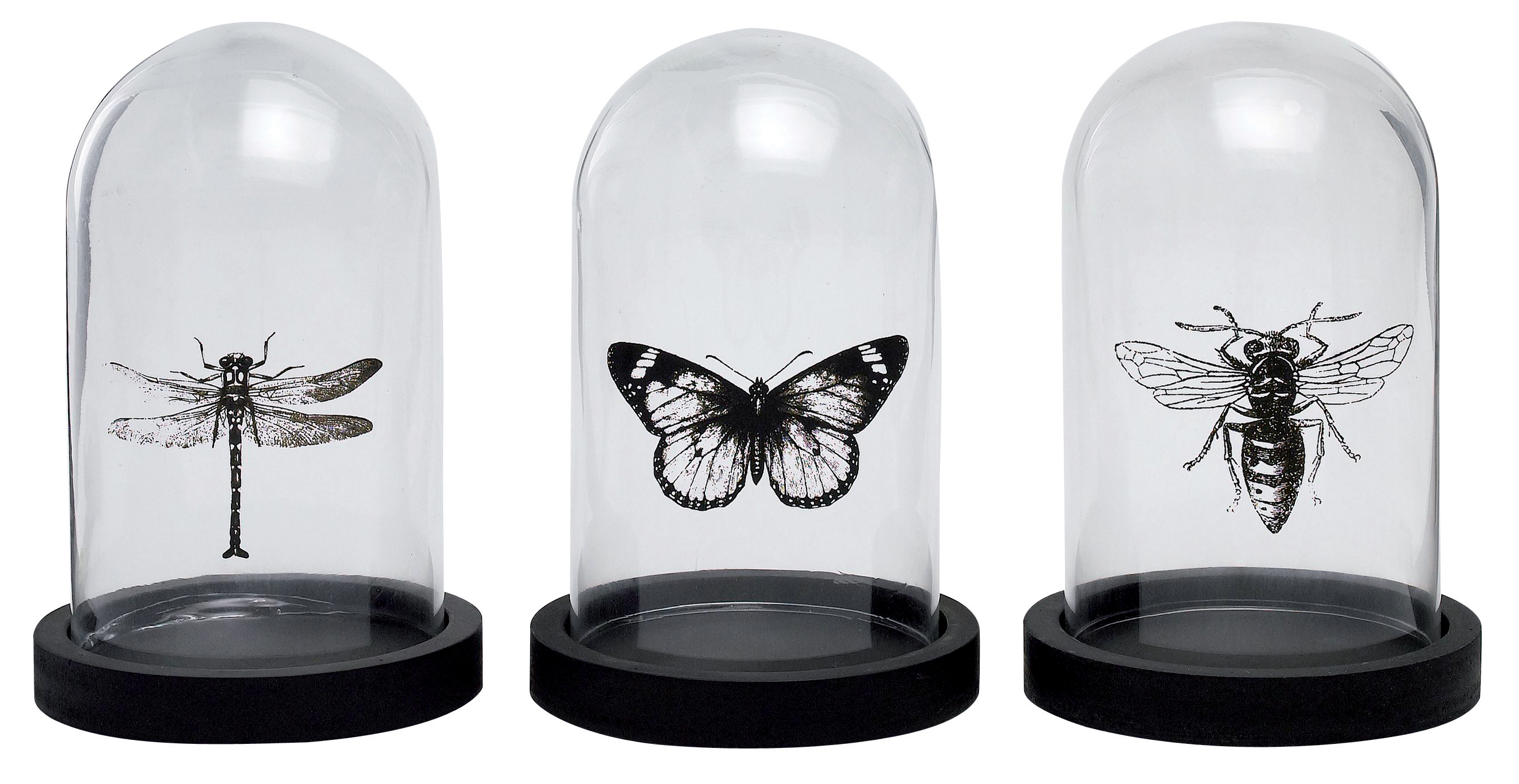 papillons insectes conforama 359 degr s le blog 359 degr s le blog. Black Bedroom Furniture Sets. Home Design Ideas