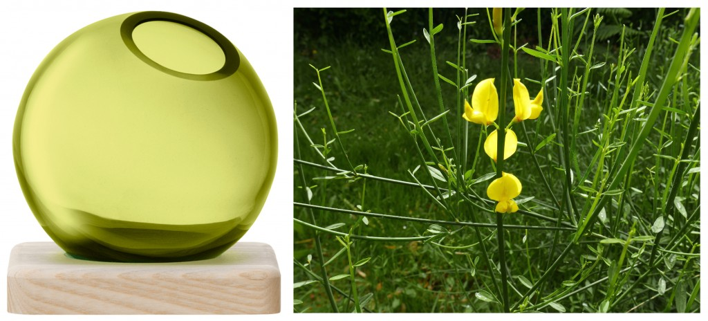 2 LSA AXIS Vase genet