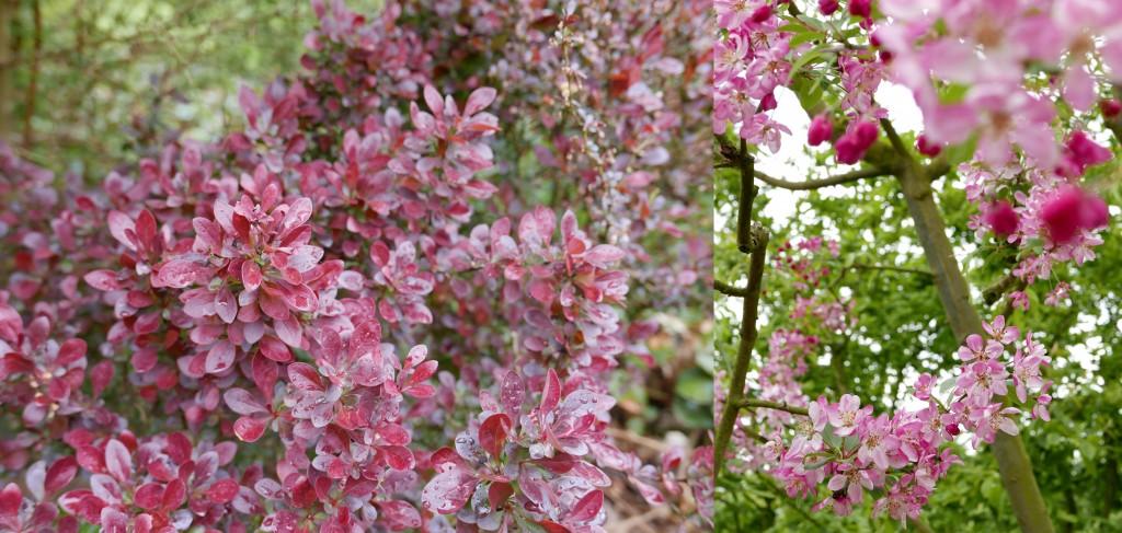 fleursjardinsdevalloires roses
